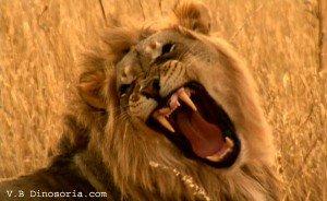 Petit test sur le signe du LION lion-300x184