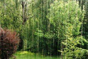 signes et saison dans sagesses et équilibre de vie pluie-300x202